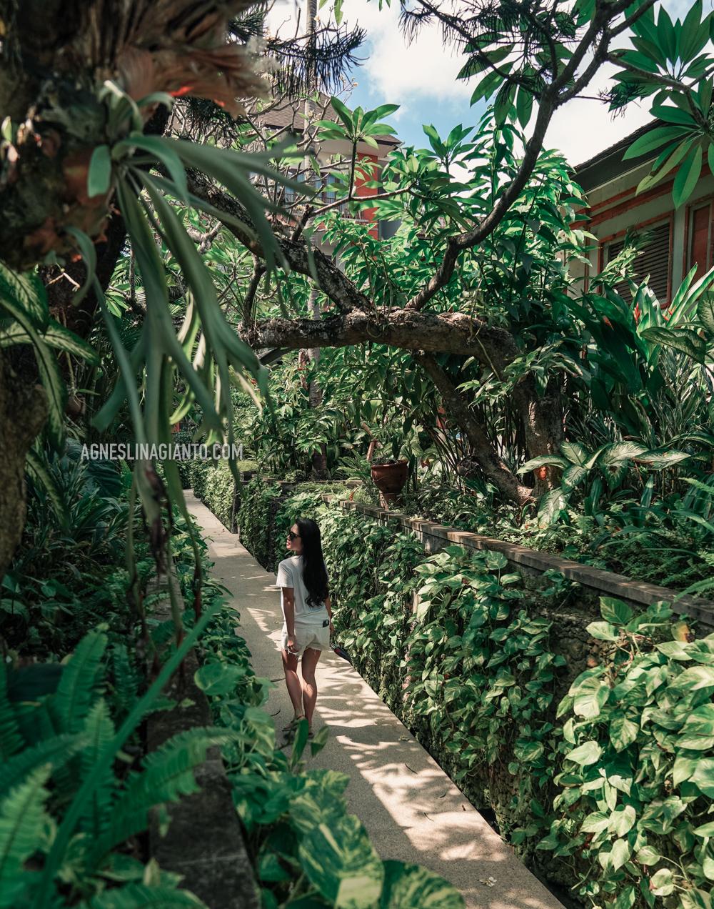 Lush tropical garden